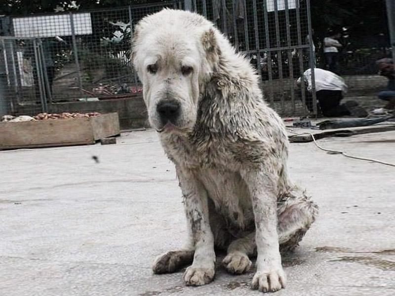 Старый пес, брошенный хозяевами умирать в питомнике, спас четыре жизни