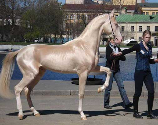 most-beautiful-horse-3