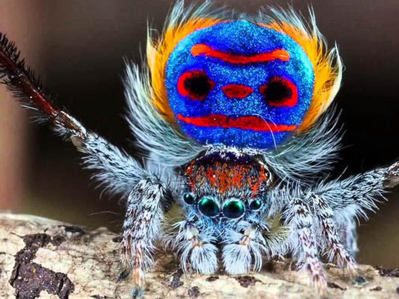 За последний год было обнаружено 10 новых видов животных