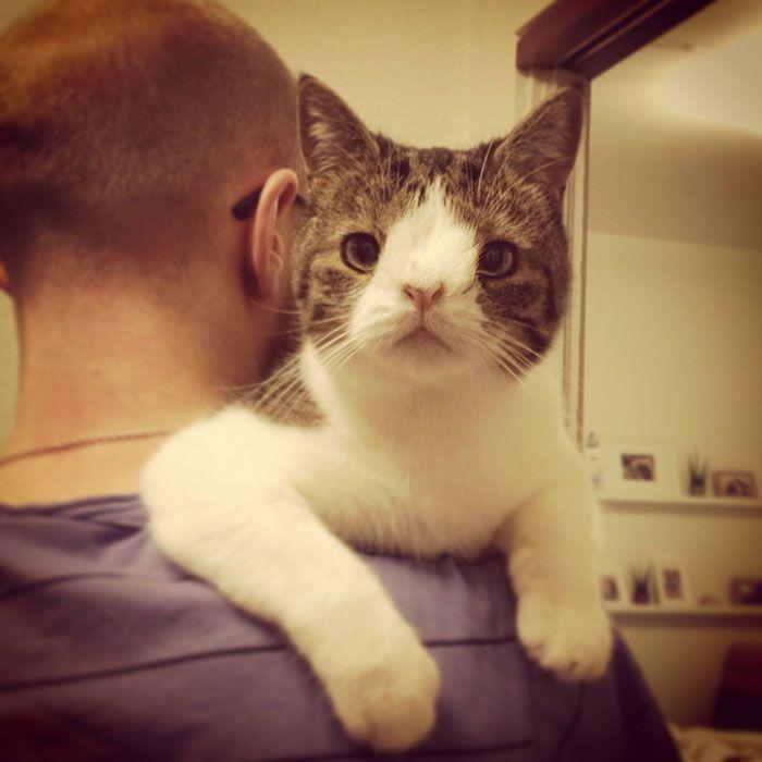 cute_cat_24