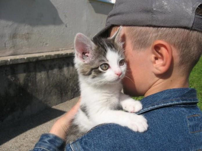 Продаются котята: душевная история о человечности