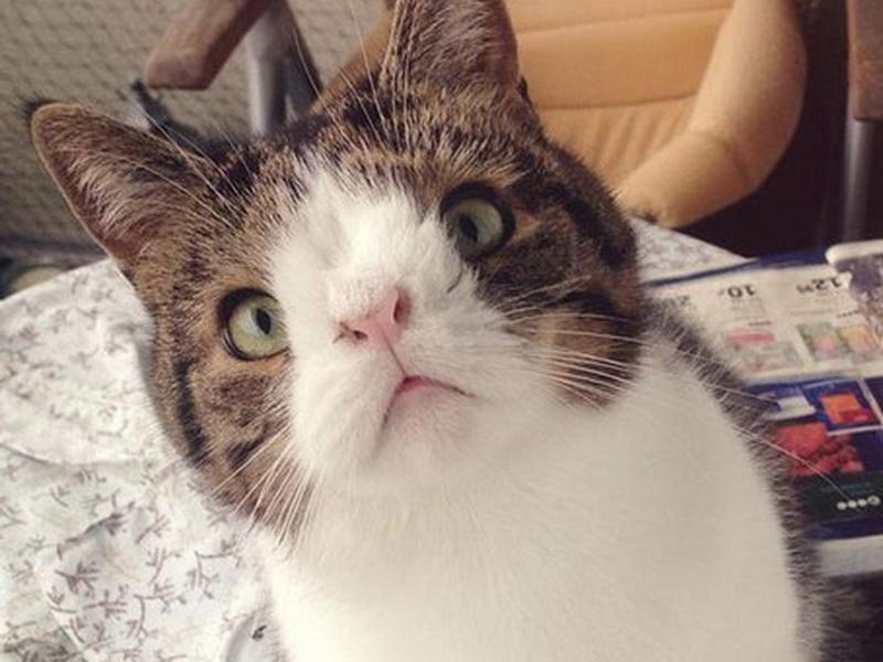 Знакомьтесь: Монти – прекрасный кот с необычной мордочкой