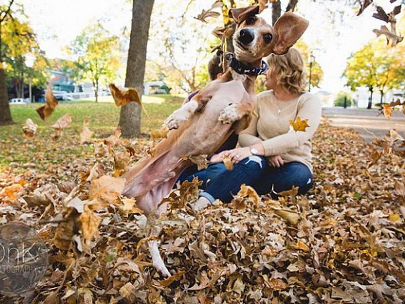 Пес, который решил украсить собой фотосессию, посвященную помолвке