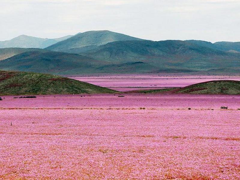 Что произойдет, если в пустыне пойдет дождь?