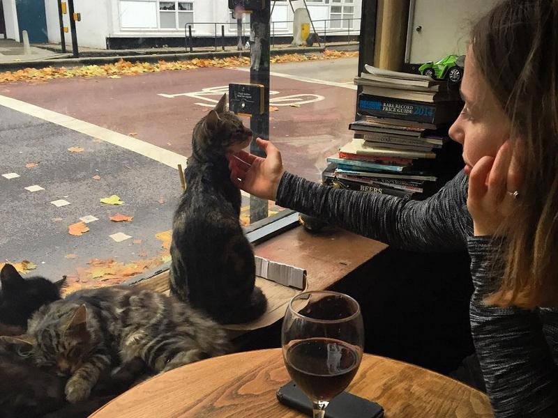 Любите пиво и кошек? Тогда этот паб создан специально для вас!