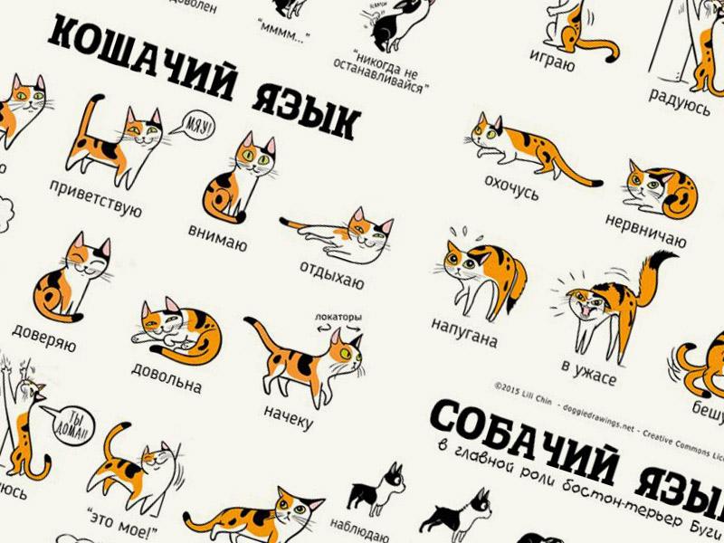 Кошачий и собачий языки