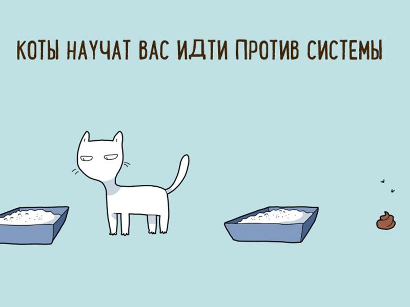 10 шуточных причин, по которым каждый должен завести себе кота