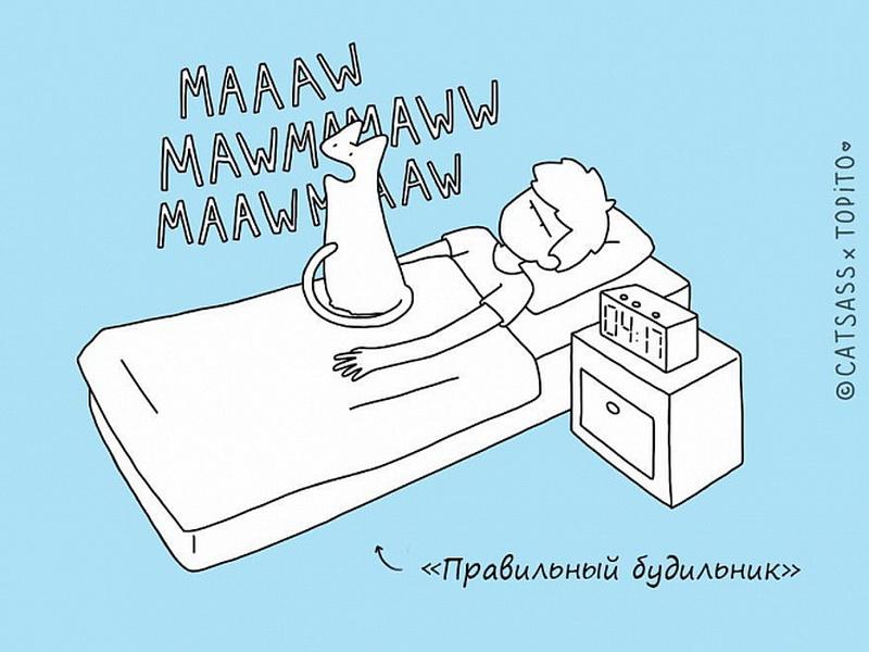 Инструкция для кошек: как правильно спать с человеком