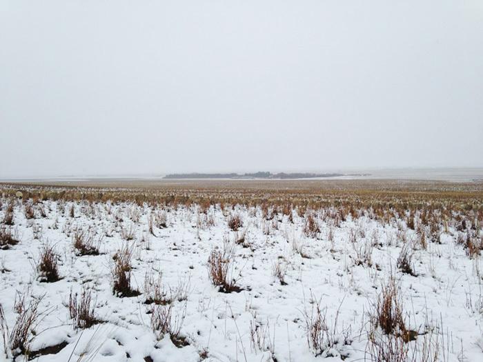 На этом снимке 550 овец. Видите их?