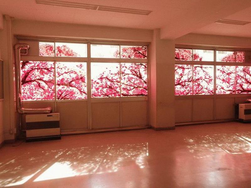 Кажется, что за окном цветет сакура. Но вы удивитесь, когда узнаете, кто и зачем создал эту красоту на самом деле