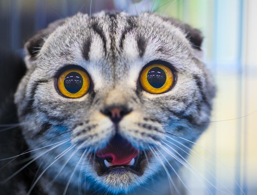 Ученые выяснили, почему коты боятся огурцов