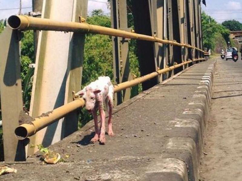 К незнакомцам в автомобиль запрыгнул страшный умирающий пес. И это изменило его жизнь!