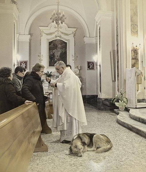 Картинки по запросу Немецкая овчарка каждый день приходит в церковь и ждет свою умершую хозяйку