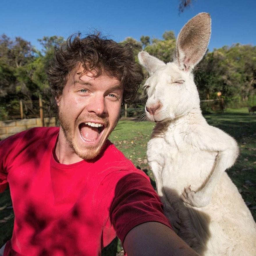 5510910-880-1450945704-funny-animal-selfies-allan-dixon-11