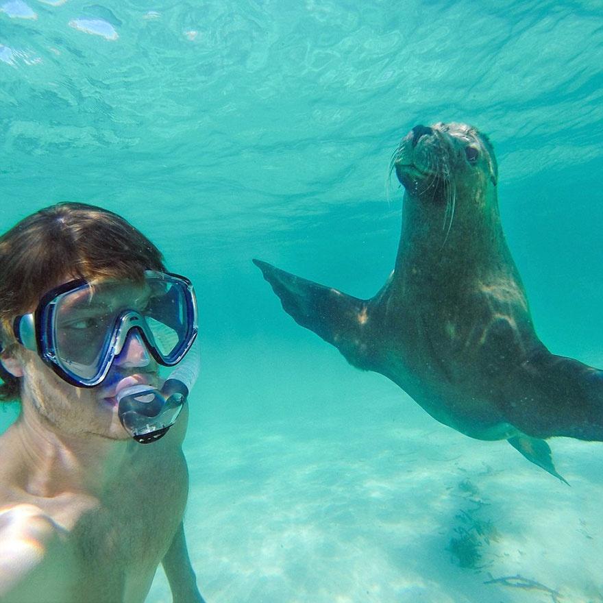 5510960-880-1450945704-funny-animal-selfies-allan-dixon-10