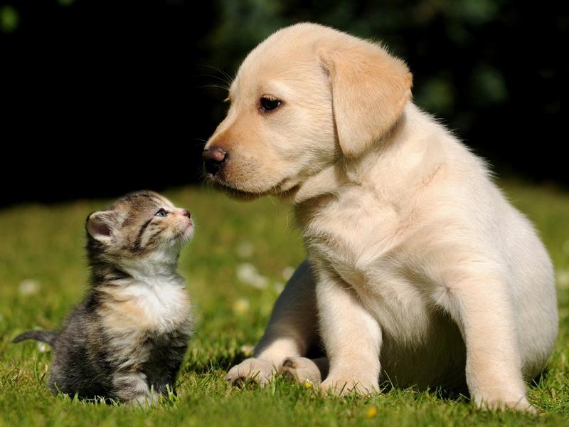 Как узнать возраст кошки или собаки в «человеческих» годах