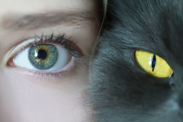 human-and-cat-eyes.jpg.838x0_q80.jpg.pagespeed.ce.9uM-tIJbKZ