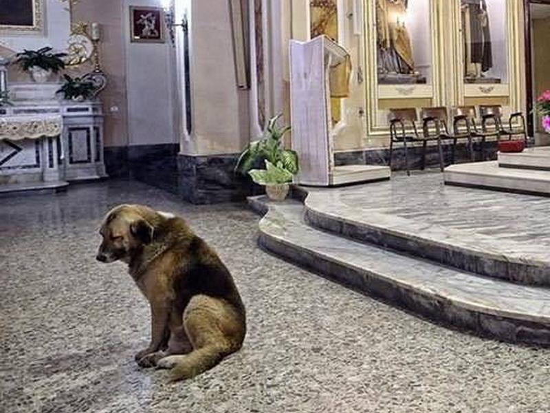 Немецкая овчарка каждый день приходит в церковь и ждет свою умершую хозяйку