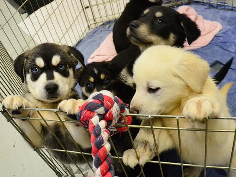 Собаки спешат на помощь: у британских студентов появился превосходный способ, как преодолеть стресс!