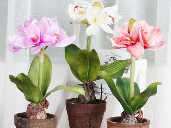 Домашние цветы цветущие постоянно
