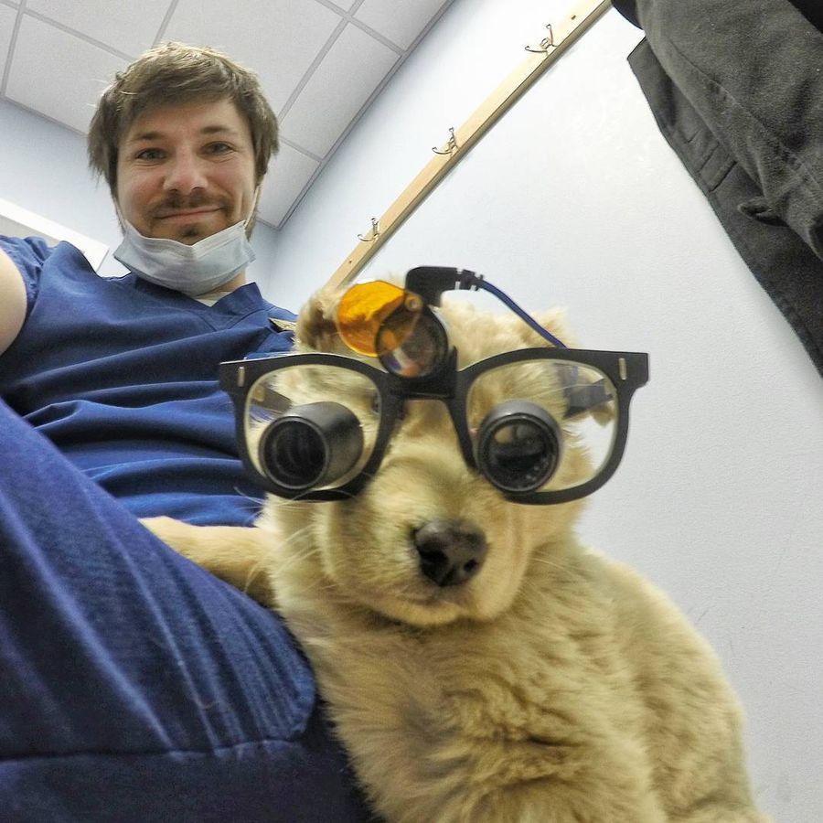 vrach-stomatolog-s-alyaski-i-ego-ocharovatelnye-sobaki-pokorili-internet-7
