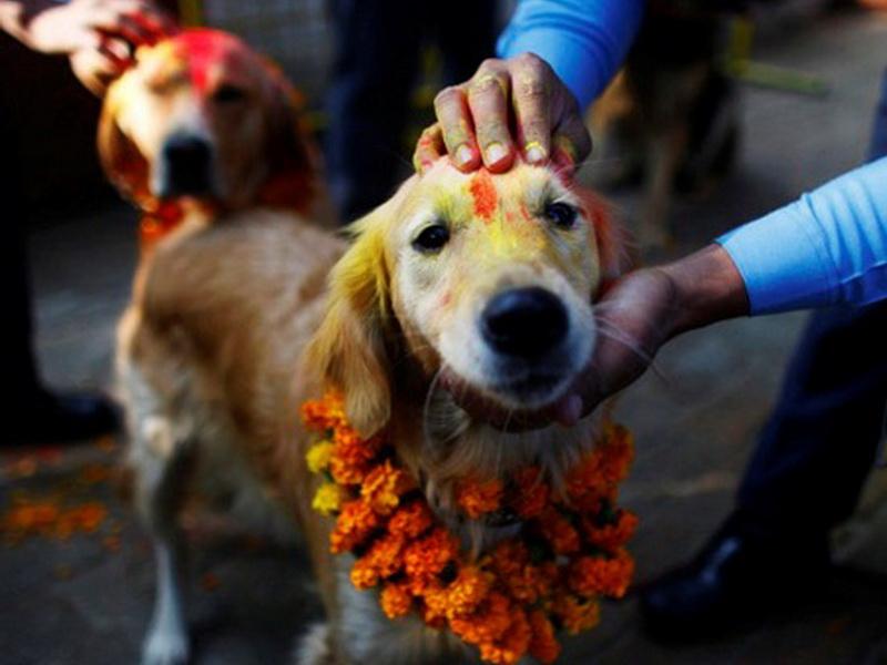 Мальчик из Индии был вынужден жениться на собаке