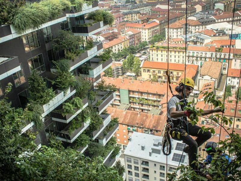 «Вертикальные леса» — прекрасный способ очистить воздух и преобразить вид города
