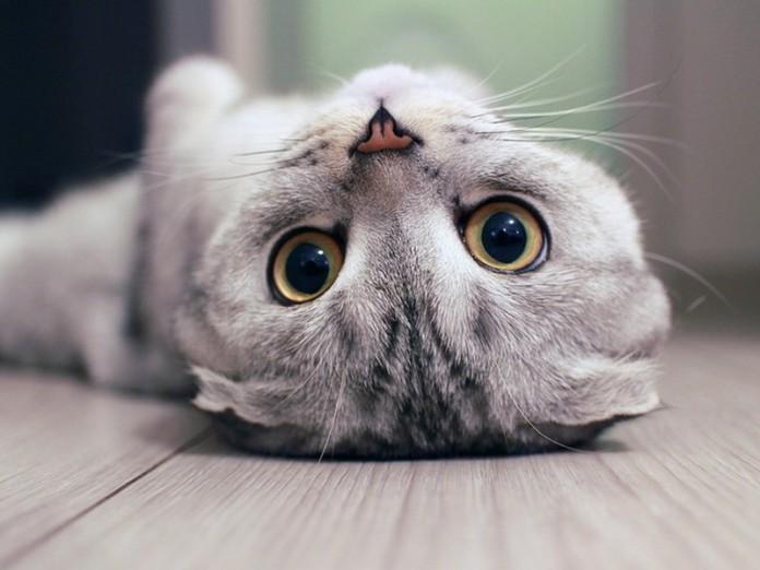 Смотрит кот в ответ