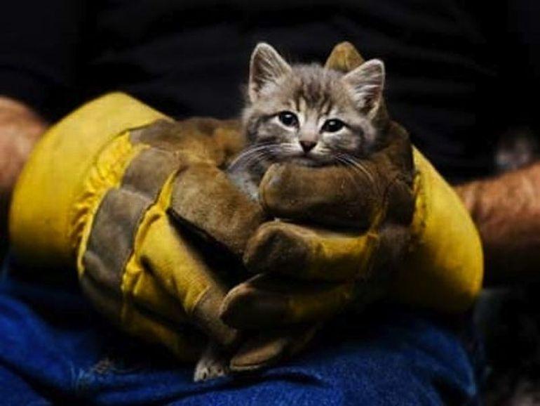 Чем для людей может обернуться спасение кота… Давно так не смеялась!