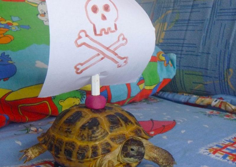 Светящаяся черепаха: легендарная история!