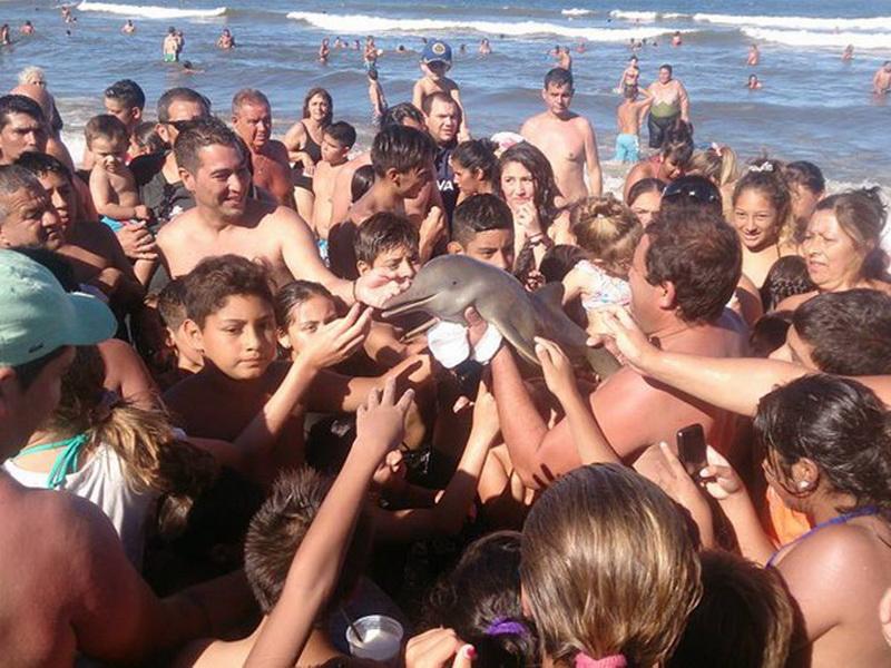 Детеныша дельфина убили туристы, пытаясь сделать с ним селфи
