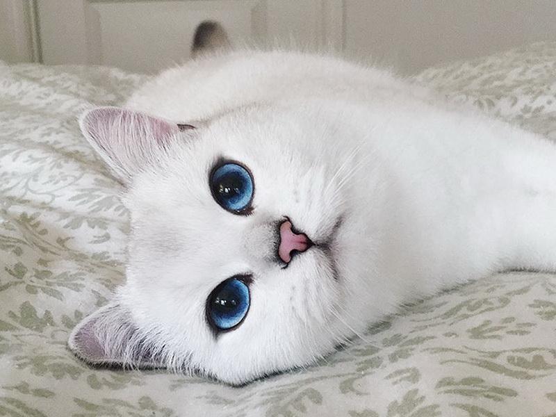 Кошка-модель с самыми прекрасными глазами!