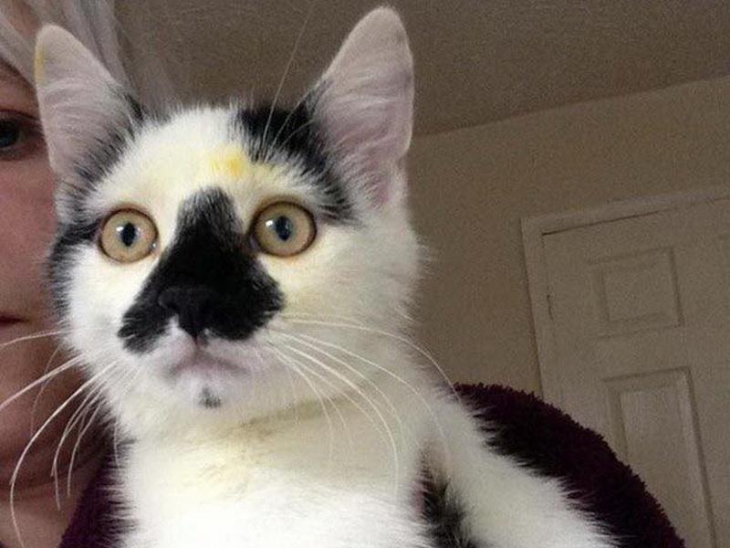 Если у вас есть кошка, ни в коем случае не держите в доме лилии!