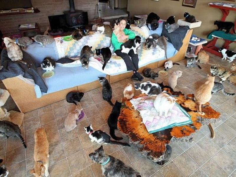 В доме этой женщины живет 1100 котов! Многие уже подумали, что она сумасшедшая, но…