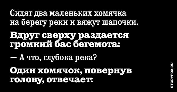 Анекдот Про Хомяка
