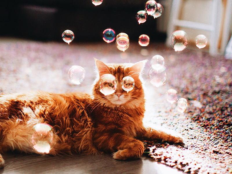 Русский кот стал звездой Интернета: самый милый флегматик!