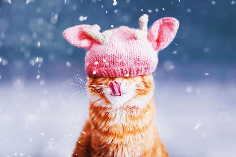 ginger-cat-photography-kotleta-cutlet-kristina-makeeva-hobopeeba-10