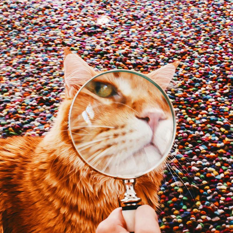 ginger-cat-photography-kotleta-cutlet-kristina-makeeva-hobopeeba-26