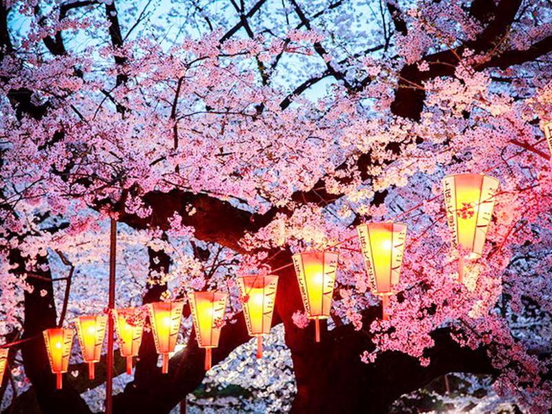 Цветущие сакуры на снимках National Geographic