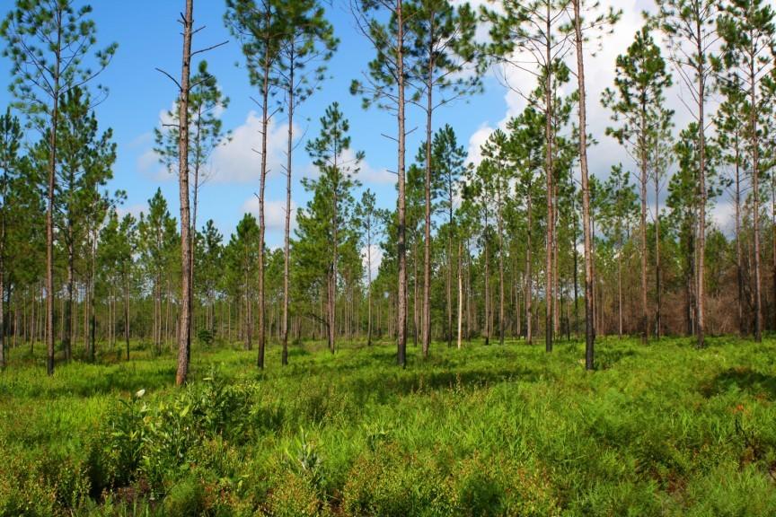 Этот человек высадил 8 млн деревьев и восстановил лес, вырубленный 100...