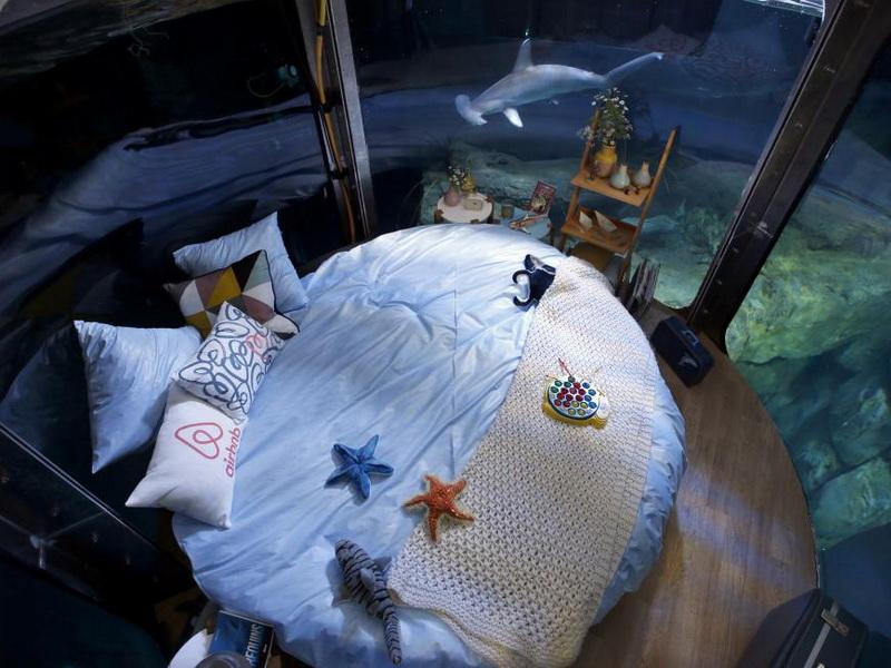 Провести ночь в окружении акул? Это не кошмар, а реальное предложение для любителей экстрима!