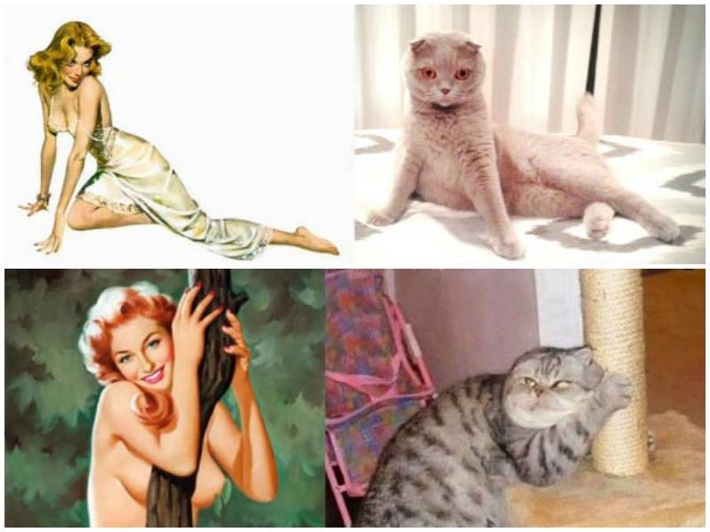 Кошки против девушек-пинап: кто круче?