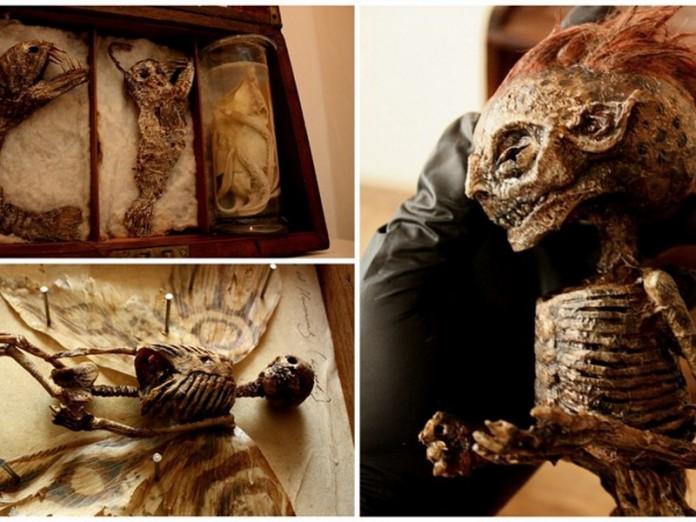 В подвале одного из старых лондонских особняков обнаружили тела странных существ