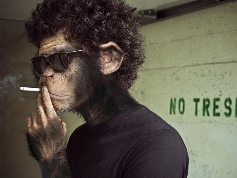 Далеко ли человек ушел от обезьян? Результаты этого эксперимента шокируют!