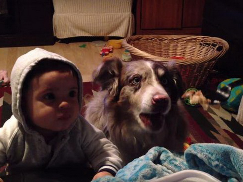Она хотела научить сына говорить «мама» за вкусняшку, но собака сказала это первой!