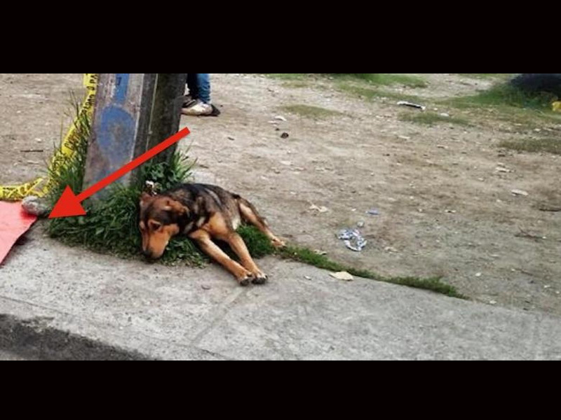 Это не обычное фото собаки. Вся суть в том, КУДА она смотрит!