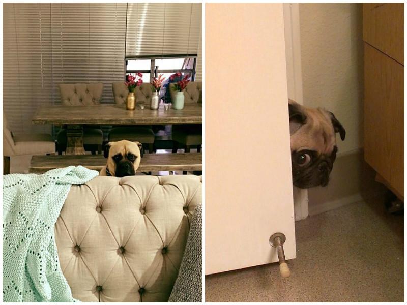 Вот почему собаки постоянно ходят по пятам за своим хозяином