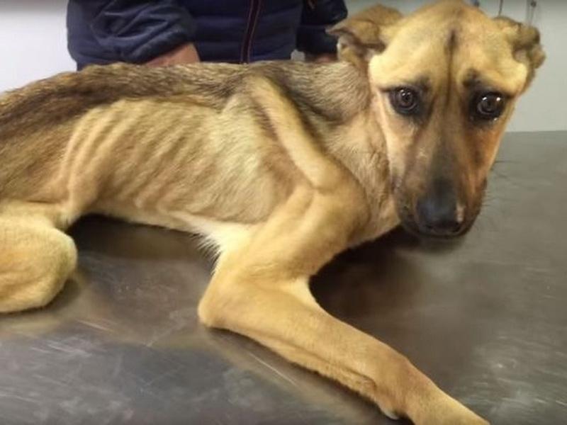 История о чудесном восстановлении собаки, которая показывает, на что способна человеческая доброта и забота