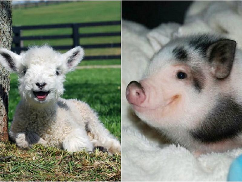 Улыбающиеся животные, которые моментально поднимают настроение!