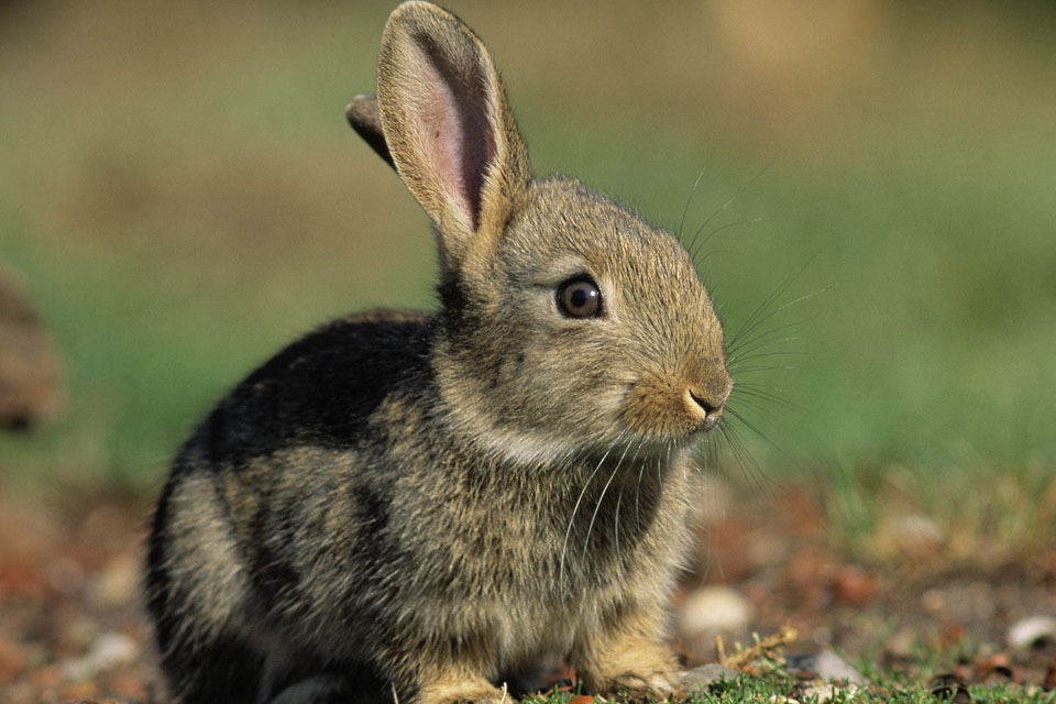 Мужчина пытался скрыть смерть кролика соседей. Но что случилось дальше…